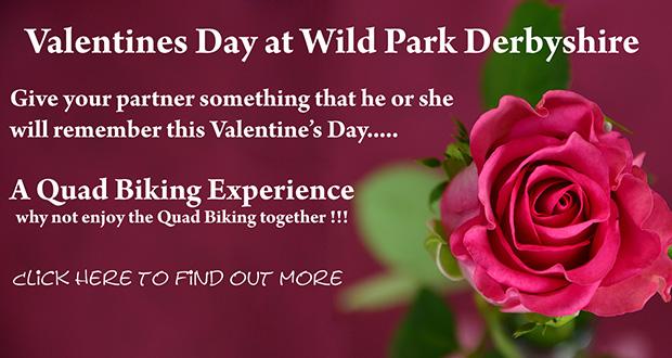 wild-park-valentines-day-banner